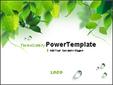 나뭇잎 넝쿨과 물방울 템플릿_애니형_300TGp