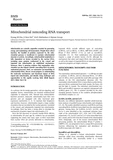 Mitochondrial noncoding RNA transport
